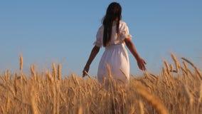 Девушка в белом платье идет к полю зрелой пшеницы, рук касания девушки зрелые уши пшеницы, замедленного движения : видеоматериал