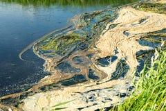 Экологическое бедствие на реке Массовая смерть рыб стоковое изображение rf