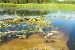 Экологическое бедствие на реке Массовая смерть рыб стоковые фото