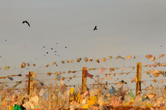 экологическо стоковые изображения rf