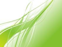 экологичность предпосылки Стоковые Изображения