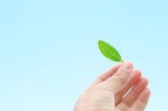 экологичность принципиальной схемы Стоковые Изображения