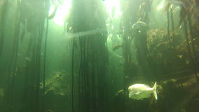 Экосистема аквариума Дубай акции видеоматериалы
