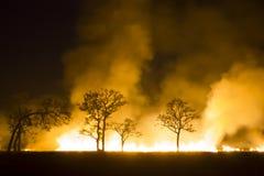 Экосистема пущи лесного пожара горящая разрушена Стоковое фото RF