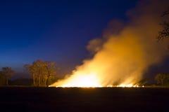 Экосистема пущи лесного пожара горящая разрушена стоковое изображение rf