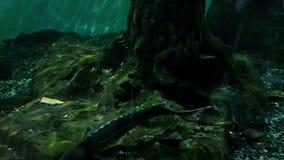 Экосистема реки, рыба в большом аквариуме, океанографический музей реки акции видеоматериалы
