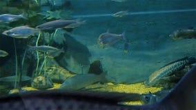 Экосистема реки, рыба в большом аквариуме, океанографический музей реки сток-видео