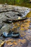 Экологическая катастрофа - offal - загрязнение Стоковая Фотография