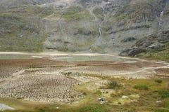 Экологическая последовательность Стоковое фото RF
