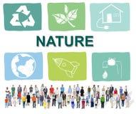 Экологический рост c предохранения от консервации жизни консервации стоковые фотографии rf