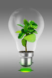 экологически чистая энергия Стоковое Фото