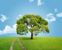 Экологическое изображение Стоковые Изображения