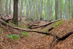 экологическо стоковая фотография rf