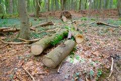 экологическо стоковые фото