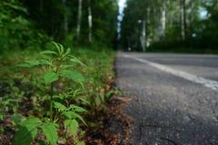 Экологичность границы асфальта цветка завода стоковая фотография rf