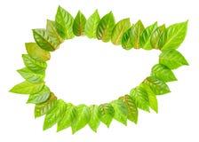 Экологичность концепции рамки свежих зеленых листьев изолирована на wh Стоковое Фото
