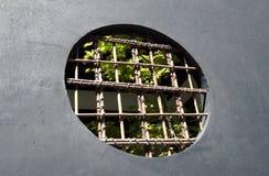 экранированное окно Стоковая Фотография