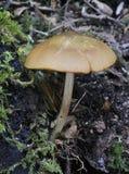 экран грибка оленей Стоковое Изображение RF