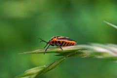 экран жука Стоковое фото RF