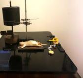 Эксперименты используя мышей в старом Стоковое фото RF