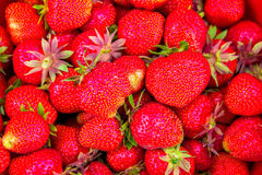 Экспозиция свежих органических клубник, здоровая еда лета, вкусный плодоовощ, Стоковое Изображение