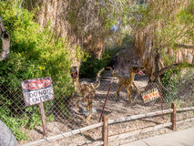 Экспонаты динозавра, живущий зоопарк пустыни и ботанический сад стоковая фотография rf