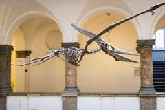 Экспонаты старых ископаемых флоры и фауны музея Мюнхена антропологического стоковое изображение rf