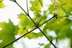 Эксцентричные кривые ветвей дерева стоковая фотография rf