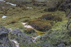 Эксцентричные старые утесы tepui Roraima плато - Венесуэла, Стоковое Изображение