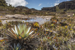 Эксцентричные старые утесы tepui Roraima плато - Венесуэла, Стоковые Фото
