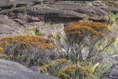 Эксцентричные старые утесы tepui Roraima плато - Венесуэла, Стоковое Фото
