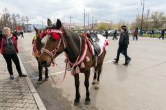 Элегантная лошадь стоит в городской площади ждать те которые хотят ехать она, во время торжества дня WWII победы стоковые фото