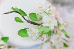Элегантная свадьба или именниный пирог украшенный с ветвью цветения яблока Стоковые Изображения RF