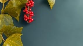 Элегантные листья и предпосылка осени плодоовощ рябины Стоковое Изображение