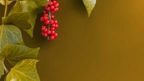 Элегантные листья и рябина приносить на простой желтой предпосылке Стоковые Фото