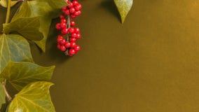 Элегантные листья и рябина приносить на текстурированной желтой предпосылке Стоковое Изображение RF