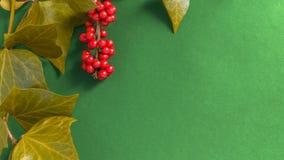 Элегантные листья и рябина приносить на текстурированной зеленой предпосылке Стоковые Фото