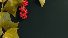 Элегантные листья и рябина приносить на текстурированной темной ой-зелен предпосылке Стоковая Фотография RF