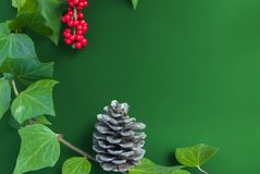 Элегантные ягода и конус рябины листьев на простой зеленой предпосылке Стоковое Изображение