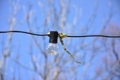 Электрическая лампочка вися на проводе во время фестиваля весны стоковое изображение
