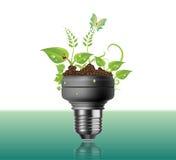 Электрическая лампочка с заводами и цветками Стоковая Фотография RF