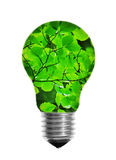 Электрическая лампочка с листьями стоковое изображение