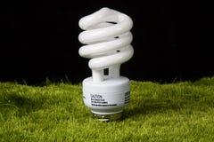 Электрическая лампочка Greeen Стоковое Изображение RF