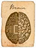 Электронный мозг. Иллюстрация штока