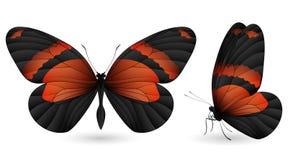 элементы бабочки детальные Фронт и взгляд со стороны Стоковая Фотография