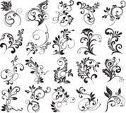 элементы конструкции флористические Стоковое фото RF