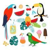 Элементы лета тропические графические Toucan, птицы попугая Иллюстрации коктеилей, плодоовощ, мороженого и джунглей флористически Стоковая Фотография
