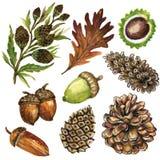 Элементы сезона осени акварели дуба конусов сосны жолудей листьев осени конструируют иллюстрацию изолированную на белой предпосыл иллюстрация вектора