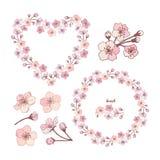 Элементы цветков яблока иллюстрация штока
