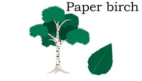 Элемент вектора деревьев бумажной березы зацепляет икону иллюстрация вектора